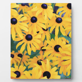 Black Eyed Susan Flowers in Deep Yellow Plaque