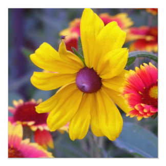 Black eyed susan flowers plus a fly colorful photo card
