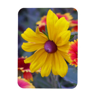 Black eyed susan flowers plus a fly colorful photo magnet