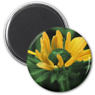 Black Eyed Susan On Green Flower Magnet