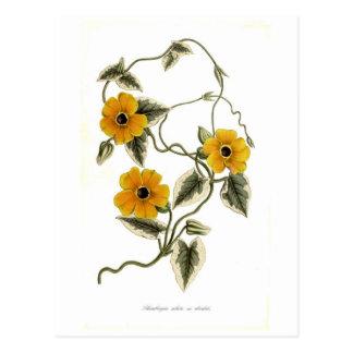 Black-eyed Susan Postcard