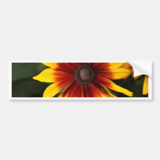 Black-eyed-Susan (Rudbeckia hirta) Bumper Sticker
