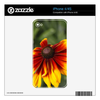 Black-eyed-Susan (Rudbeckia hirta) Decals For iPhone 4