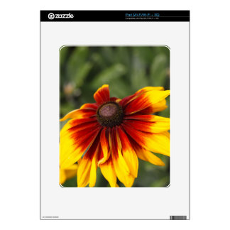 Black-eyed-Susan (Rudbeckia hirta) Skin For iPad