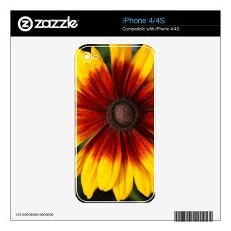 Black-eyed-Susan (Rudbeckia hirta) Skins For iPhone 4