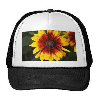 Black-eyed-Susan (Rudbeckia hirta) Trucker Hat