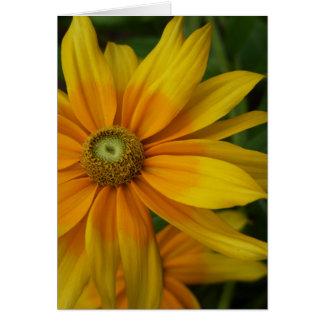 """Black-eyed Susan's, Rudbeckia hirta """"Prairie Sun"""" Card"""