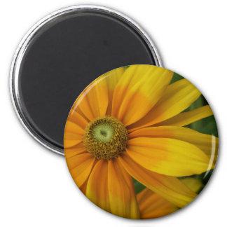 """Black-eyed Susan's, Rudbeckia hirta """"Prairie Sun"""" Magnet"""