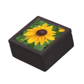 Black Eyed Susan Sitting Pretty Gift Box