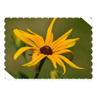 Black Eyed Susan Solitude Card