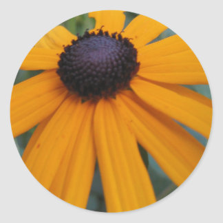 Black-eyed Susan Sticker