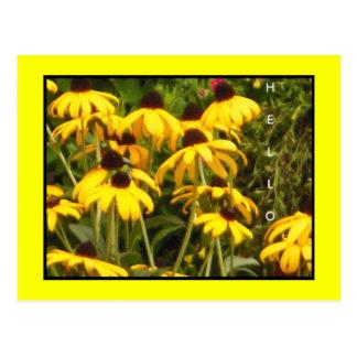 Black Eyed Susan Wildflowers Postcard