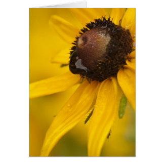 Black-Eyed Susan with a Teardrop Card