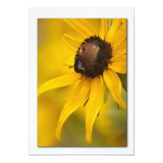 Black-Eyed Susan with a Teardrop Template Card