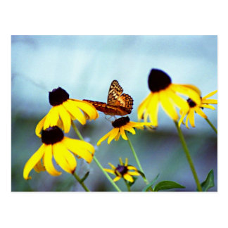 black-eyed susan with butterfly 1 post cards
