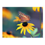 black-eyed susan with butterfly 2 postcard