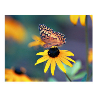 black-eyed susan with butterfly 2 postcards