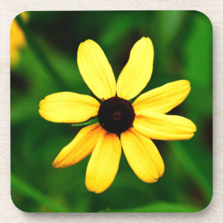 Black Eyed Susan Yellow Daisy Coffee Coasters