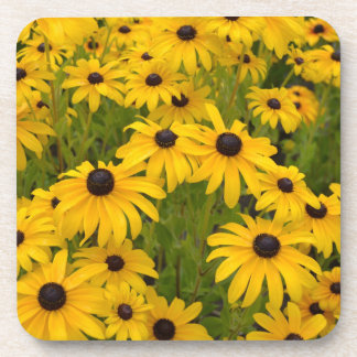 Black Eyed Susans Coaster Set
