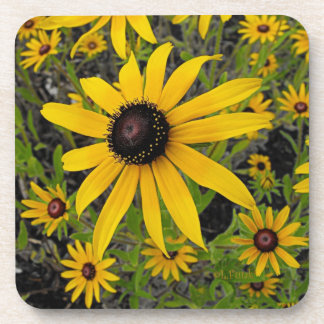 Black Eyed Susans Coasters