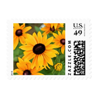 Black Eyed Susans in the Garden Postage