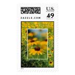 Black-Eyed Susans Postage Stamp