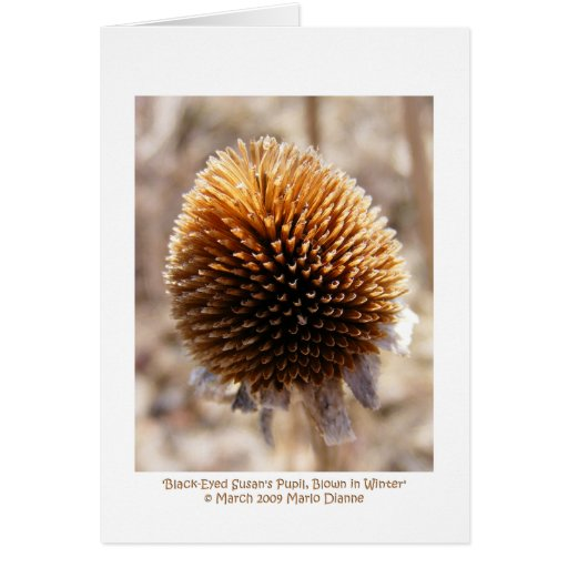 'Black-Eyed Susan's Pupil, Blown in Winter' Greeting Card