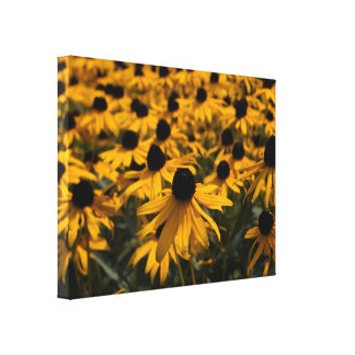 Black Eyed Susans Wrapped Canvas Print