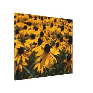 Black Eyed Susans Wrapped Canvas Print