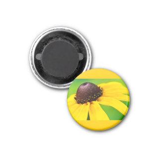black eyed witness magnet