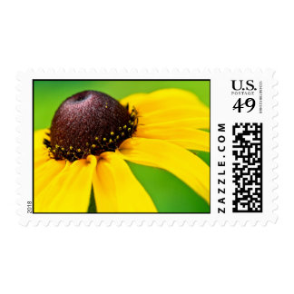 black eyed witness postage