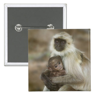 Black-face Langurs, mother with baby, in 2 Inch Square Button