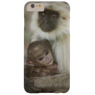 Black-face Langurs, mother with baby, in Barely There iPhone 6 Plus Case