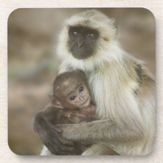 Black-face Langurs, mother with baby, in Beverage Coaster