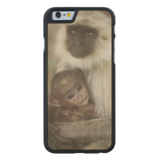 Black-face Langurs, mother with baby, in Carved® Maple iPhone 6 Case