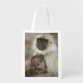 Black-face Langurs, mother with baby, in Grocery Bags