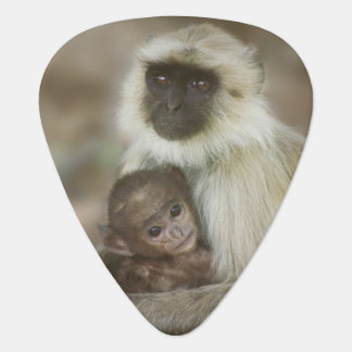 Black-face Langurs, mother with baby, in Guitar Pick