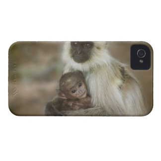 Black-face Langurs, mother with baby, in iPhone 4 Case-Mate Case