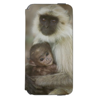 Black-face Langurs, mother with baby, in iPhone 6/6s Wallet Case