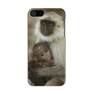 Black-face Langurs, mother with baby, in Metallic iPhone SE/5/5s Case