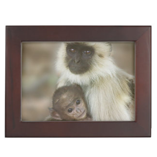 Black-face Langurs, mother with baby, in Memory Boxes