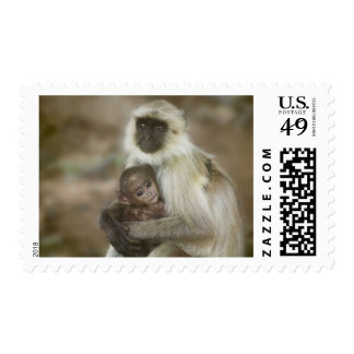 Black-face Langurs, mother with baby, in Postage