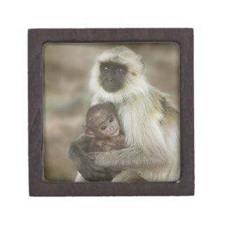 Black-face Langurs, mother with baby, in Premium Jewelry Boxes