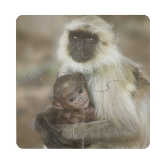 Black-face Langurs, mother with baby, in Puzzle Coaster