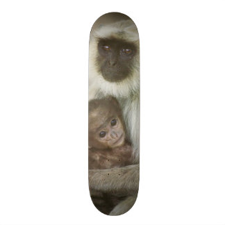 Black-face Langurs, mother with baby, in Skateboard