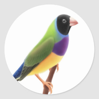 Black Faced Gouldian Finch Classic Round Sticker