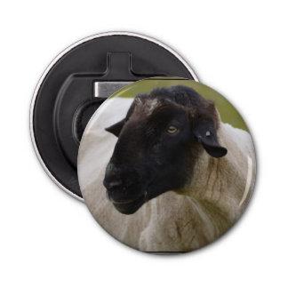 Black Faced Sheep