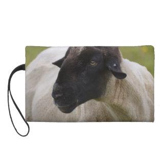 Black Faced Sheep Wristlet Purse