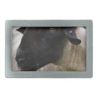 Black Faced Sheep Belt Buckles