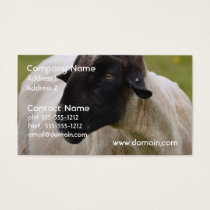 Black Faced Sheep Business Card